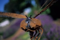 rusty insect